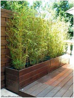 Bamboo Garden Ideas Backyards_28