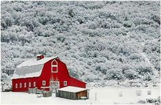 Beautiful old barn painted a beautiful new(er) red set in a beautiful snow setting.