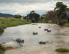 Little-House-Cat-Lives-Amogst-Dangerous-African-Wildlife3 Little-House-Cat-Lives-Amogst-Dangerous-African-Wildlife3