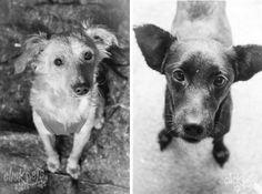 Modelo Pets: Cachorrinhas do abrigo Beco da Esperança - Raça: SRD   Click Pets - Fotografia de Animais   Visite nosso site! www.fotografiadeanimais.com.br     #ClickPets #FotografiadeAnimais #fotografiapet #Pet #Brasil #Curitiba