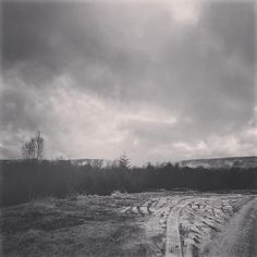 Low cloud & snow in Kielder forest after a day filming in one of England's remotest parts. Beautiful day walking and talking with @northwildlife as they collected pine cones from rare Scots Pine in @visitkielder #forest #kielder #northumberland #northumbria #landscape #weather #cloud #snow #blackandwhite #blackandwhitephotography #bnw #bnw_photo #bnwphotography #bnwbritain