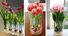 Ültess tulipánt üveg vázába, és nem csak tavasszal gyönyörködhetsz benne | Kuffer Home Hacks, Ikebana, Garden Design, Diy And Crafts, Glass Vase, Projects To Try, Spring, Plants, Home Decor