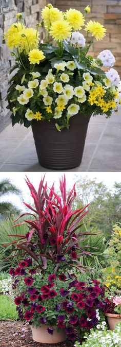 Garden Planning - 24 stunning container garden designs with PLANT LIST for each! Lots of designer tips on selecting the best mix of flower plants and creating a beautiful colorful garden which blooms all season with these planting recipes! Container Flowers, Container Plants, Container Gardening, Container Design, Succulent Containers, Ikebana, Organic Gardening, Gardening Tips, Gardening Vegetables