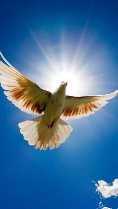 """One may only hold a sense of peace as delivered by this """"Dove"""" in flight against the sun, portraying the wings of an angel with a halo of radiant beams of light.  As sung, """"in the arms of the angel, fly away..."""""""