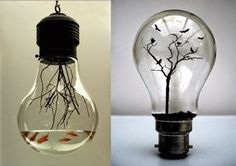 mini aquarium ampoule