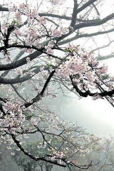 Helgens Feng Shui reflektion