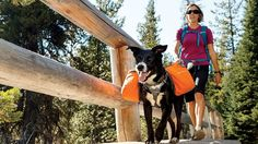 Top 5 Best Dog Backpack Reviews Best Cheap Dog Backpack for Hiking