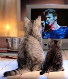 The cats love David Bowie :)