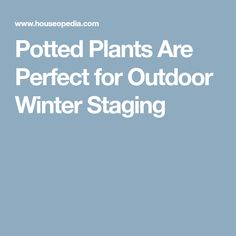 Potted Plants Are Perfect for Outdoor Winter Staging