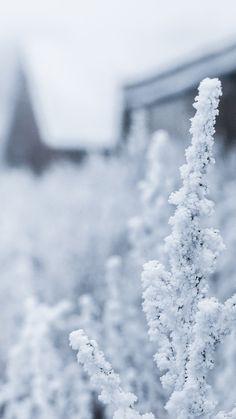 Snow White Winter Flower