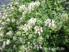 Blog Entry, Garden, Plants, Garten, Lawn And Garden, Gardens, Plant, Gardening, Outdoor