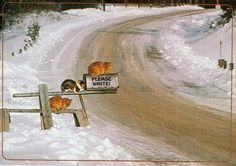 3 Snow Cats waiting for the mail