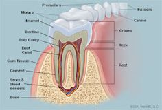 Dental care in an emergency