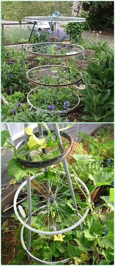 Recycled Bike Rim Trellis