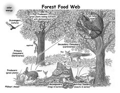 Food Webs - The Nutrient Cycle Nutrient Cycle, Ecosystems Projects, Forest Ecosystem, Desert Ecosystem, Science Activities, Rainforest Activities, Science Curriculum, Science Education, Teaching Science