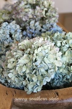 Savvy Southern Style, Southern Belle, Southern Comfort, Simply Southern, Southern Charm, Southern Living, Country Living, Hydrangea Bush, Hydrangea Care