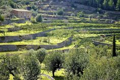 Descending through the terraces at Biniaraix #Mallorca