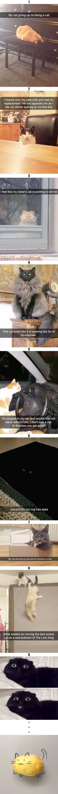 35 Funny cat memes with pictures that feature funny captions and remarks supplied by humans. Scanning for a laugh? Get a looks at these funny cat memes that deal among all kinds of funny topics. Funny Animal Jokes, Funny Cat Memes, Funny Animal Pictures, Cute Funny Animals, Animal Memes, Cute Baby Animals, Funny Cute, Cute Cats, Hilarious