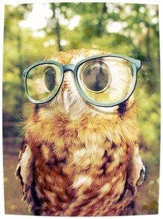 Do these make me look smart? xD #Fun #Pet #Owl