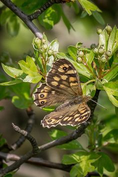 Butterfly on Flickr. Butterfly