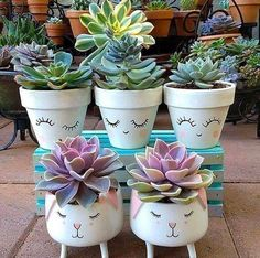 Pin on Plantas Succulent Gardening, Cacti And Succulents, Planting Succulents, Planting Flowers, Garden Art, Garden Plants, Indoor Plants, House Plants, Painted Flower Pots