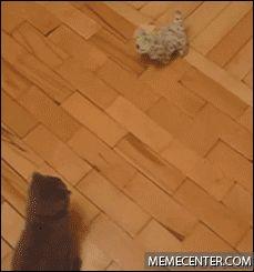 Cat-Dropkicks-Toy-Dog  | Visit http://gwyl.io/  for more diy/kids/pets videos