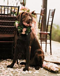 """See the """"Pet of Honor"""" in our Dogs at Real Weddings gallery"""