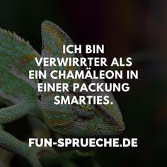 Ich bin verwirrter als ein Chamäleon in einer Packung Smarties. http://www.fun-sprueche.de/ich-bin-verwirrter-als-ein-chamaeleon-in-einer-packung-smarties-4613