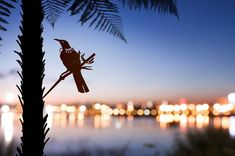 Add a bird silhouettes from Metalbird to your own landscape or give on as a gift. View the collection and get one today. Flax Flowers, Misty Eyes, Human Ear, Weathering Steel, Metal Garden Art, Metal Art, Wood Pigeon, Forest Habitat, Metal Birds