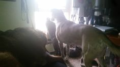 My cat and two dogs like to look out the window when I wake up