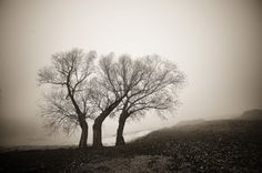 Image result for bogdan panait photography