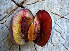 niepodlewam: Robaczywe śliwki - jak walczyć z owocówką śliwkóweczką