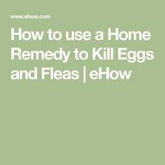 How to use a Home Remedy to Kill Eggs and Fleas | eHow
