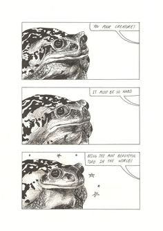 Stepchild of the Sun — It must be so hard. Being the most beautiful toad. Animals And Pets, Funny Animals, Cute Animals, Illustrations, Illustration Art, Potnia Theron, Dame Nature, Cute Frogs, Frog And Toad