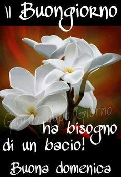 38 Fantastiche Immagini Su Buona Domenica Bonjour Good Morning E