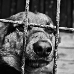 Picture, animals, dog, cage  //  bwstock.photography/animals.html