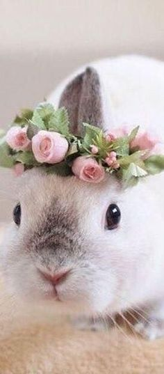 Animals, especially baby animals, can make very cute sounds and noises. Just listen how all this puppies bark and howl, how kittens meow, noises of cute baby Funny Bunnies, Baby Bunnies, Cute Bunny, Bunny Rabbits, Bunny Bunny, Easter Bunny, Animals And Pets, Baby Animals, Funny Animals