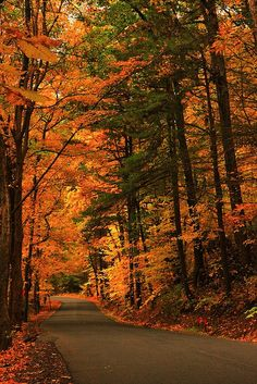Fall road in Saugerties, Catskills Mountains, New York; photo by .Roger C… Beautiful Places, Beautiful Pictures, Autumn Scenes, All Nature, Autumn Nature, Warm Autumn, Seasons Of The Year, Fall Pictures, Jolie Photo