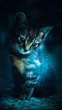Cute Animal Drawings Kawaii, Cute Cartoon Animals, Cute Little Animals, Anime Animals, Pretty Cats, Beautiful Cats, Animals Beautiful, Baby Animals Pictures, Cute Animal Photos