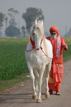 Marwari horse with red halter and collar and master with red attire. Pretty sight. Look how white this horse is! Gorgeous beautiful animal!