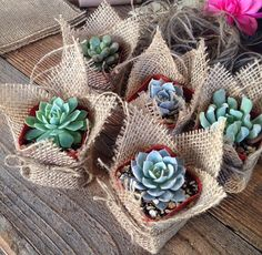 "Succulent Favors Assorted Collection. 25 Fully Assembled Premium Succulents in 2"" pots Wrapped in Burlap - La Fleur Succulente"