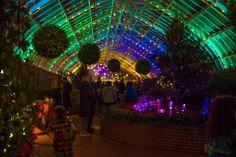 Phipps Winter Garden Light Show #Pittsburgh #thingstodoinpittsburgh