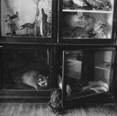 Francesca Woodman Specola Cabinet I Love Herstory