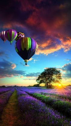 Tranquil Hot Air Balloons /& Lavender Field /& Freepost 1st class Thank You Card
