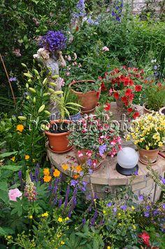 473241 - Lobelias (Lobelia), fuchsias (Fuchsia), Nemesia and petunias (Petunia) in a backyard garden