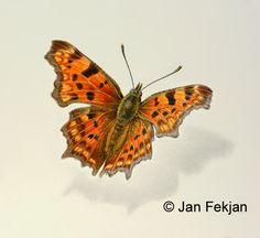 Jan Fekjan: Hvit C Giclee Print, Fine Art, Prints, Artist, Artists, Visual Arts