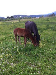 at ve yavrusu