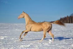 HORSES LOVES