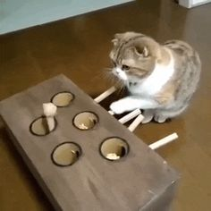 A cat-loving guy built an ingenious cat toy for his playful feline friend so that the kitty could play by herself when he is away. Lam Qian from Hong Kong knew his cat loves whack-a-mole toys, so he decided to build one for her on his own. He made a wooden box and drilled five even sized holes where...