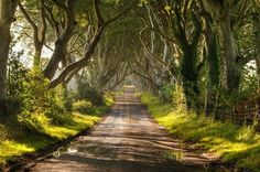 Irlanda, Nação Celta... Dark Hedges - Estrada De Árvores; Ao longo dos últimos 300 anos ou mais, as árvores de faia que guardavam cada lado da pista já 'estenderam as mãos' através de si, tornando-se fortemente entrelaçadas para criar um túnel em arco natural, onde a sombra e a luz brincam através dos ramos...
